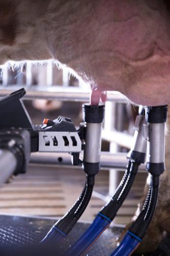delaval milking roboter